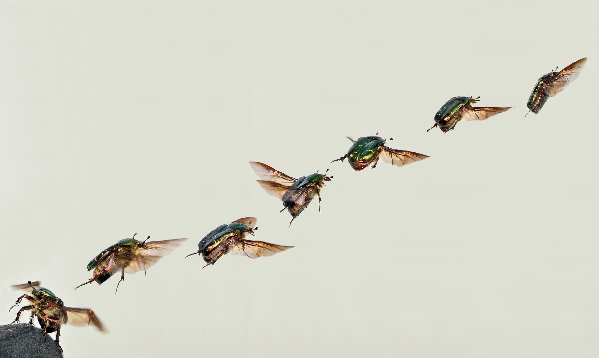shiny-rose-gold-beetle-62906_1920